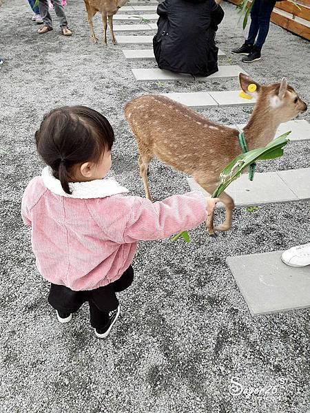 宜蘭餵鹿張美阿嬤農場2.jpg