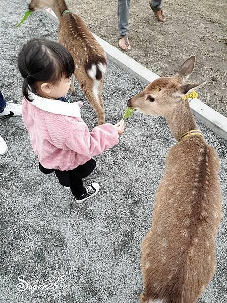 宜蘭餵鹿張美阿嬤農場4.jpg