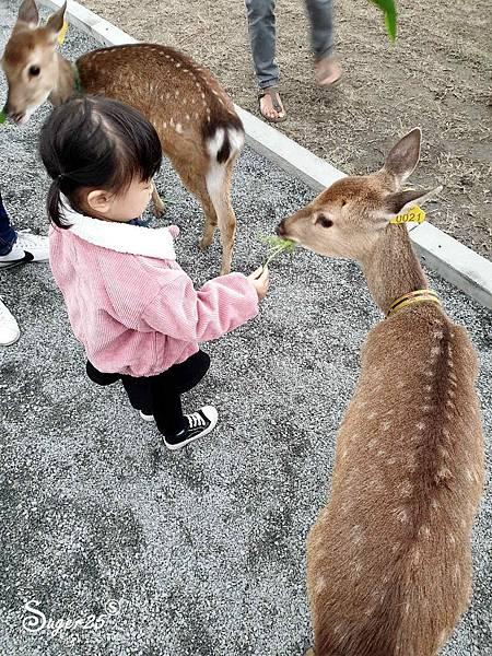宜蘭餵鹿張美阿嬤農場5.jpg