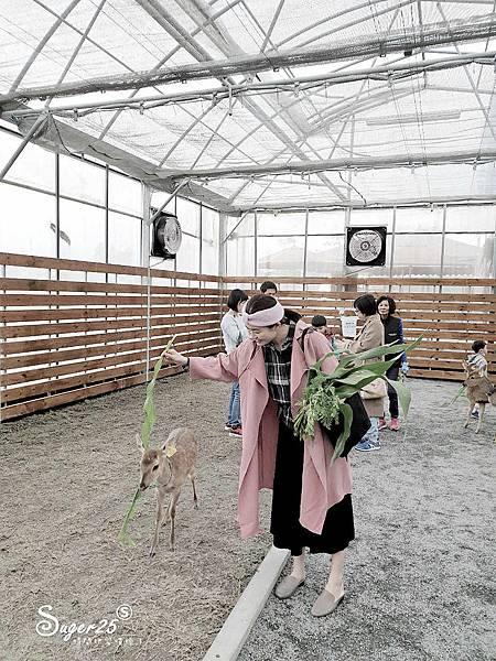宜蘭餵鹿張美阿嬤農場3.jpg