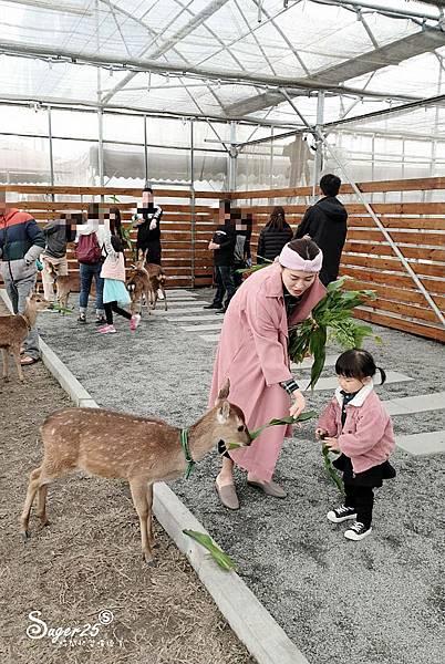 宜蘭餵鹿張美阿嬤農場7.jpg