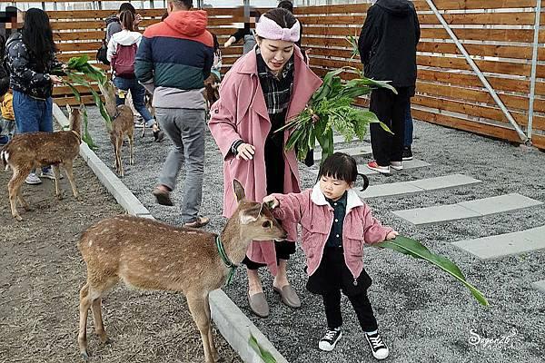 宜蘭餵鹿張美阿嬤農場8.jpg