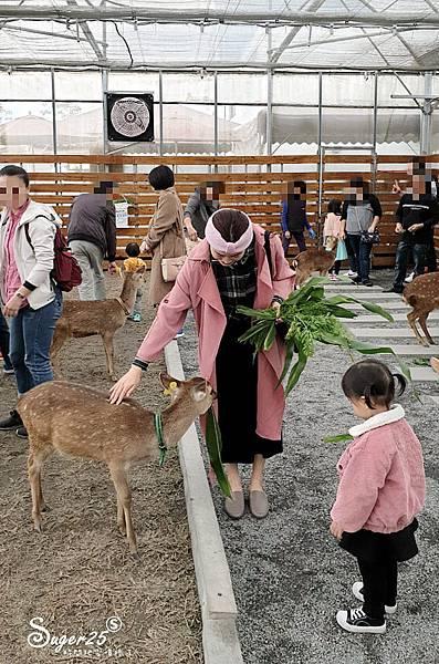 宜蘭餵鹿張美阿嬤農場9.jpg