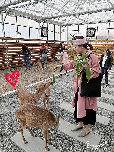 宜蘭餵鹿張美阿嬤農場11.jpg