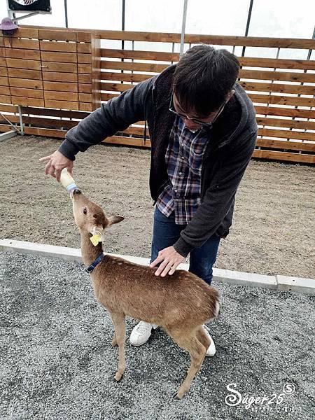 宜蘭餵鹿張美阿嬤農場12.jpg