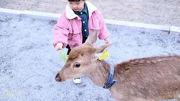 宜蘭餵鹿張美阿嬤農場16.jpg