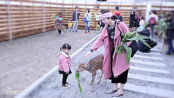 宜蘭餵鹿張美阿嬤農場17.jpg