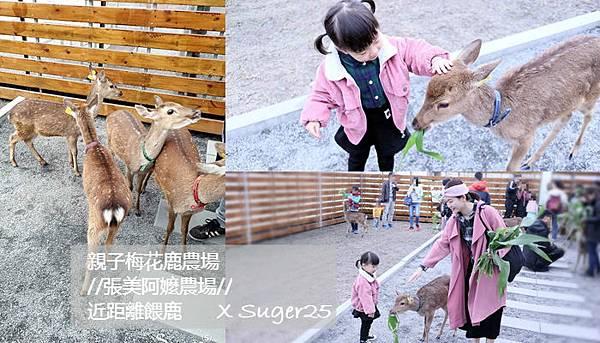 宜蘭餵鹿張美阿嬤農場25.jpg