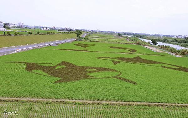 宜蘭壯圍稻田彩繪2.jpg