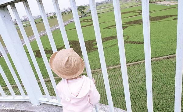 宜蘭壯圍稻田彩繪3.jpg