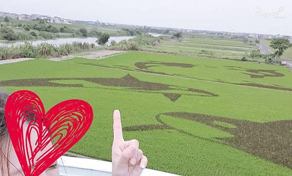 宜蘭壯圍稻田彩繪4.jpg