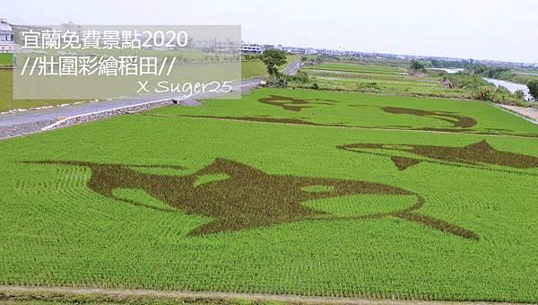 宜蘭壯圍稻田彩繪11.jpg