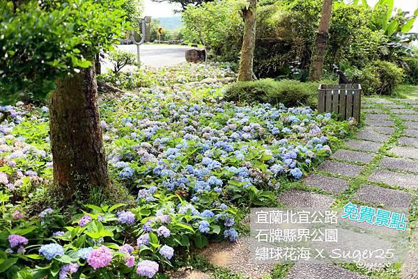 北宜公路縣界公園繡球花海36.jpg