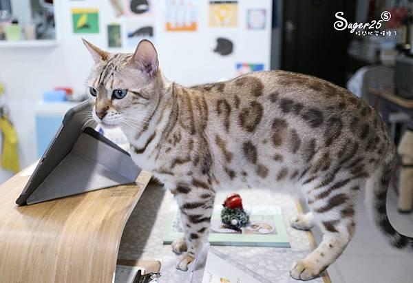 宜蘭貓的生活提案15.jpg