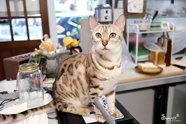 宜蘭貓的生活提案16.jpg