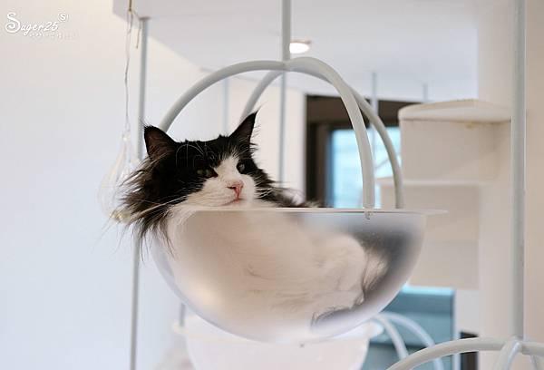 宜蘭貓的生活提案19.jpg
