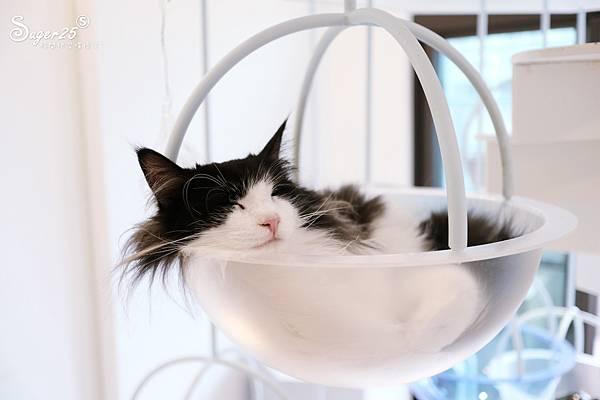 宜蘭貓的生活提案20.jpg