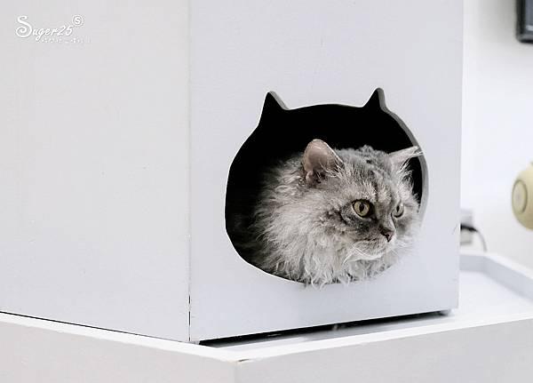 宜蘭貓的生活提案25.jpg