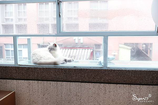 宜蘭貓的生活提案31.jpg