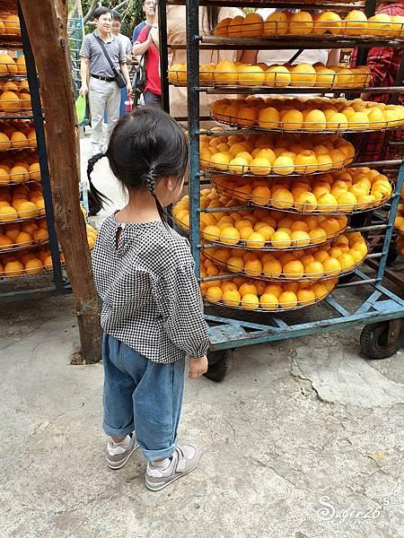 新竹北埔景點味衛佳柿餅教育農園11.jpg