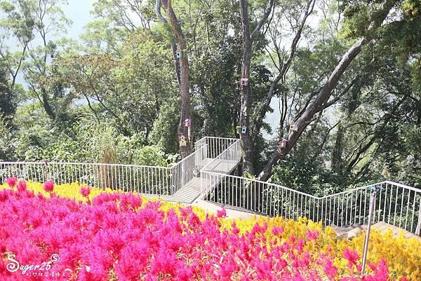 新竹景點薰衣草森林55.jpg