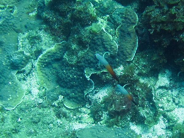 魚_1038_雷達