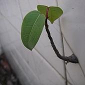 植物的超能力03.JPG