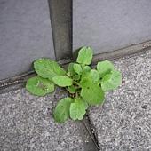 植物的超能力01.JPG