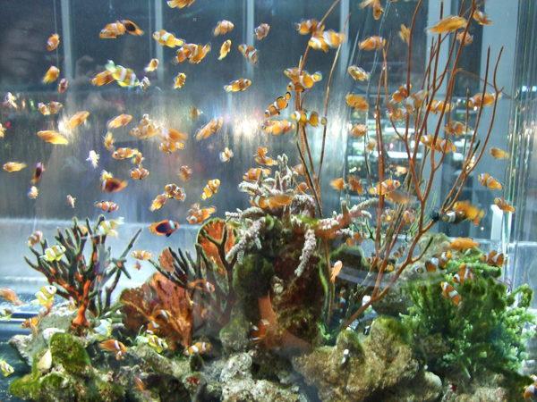 水族館入館即見小丑魚