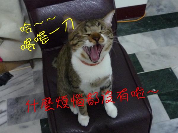 M yawn.JPG
