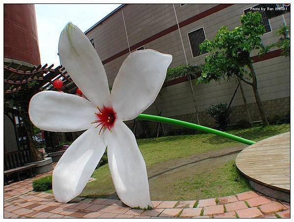 農會前有個超大桐花可供拍照