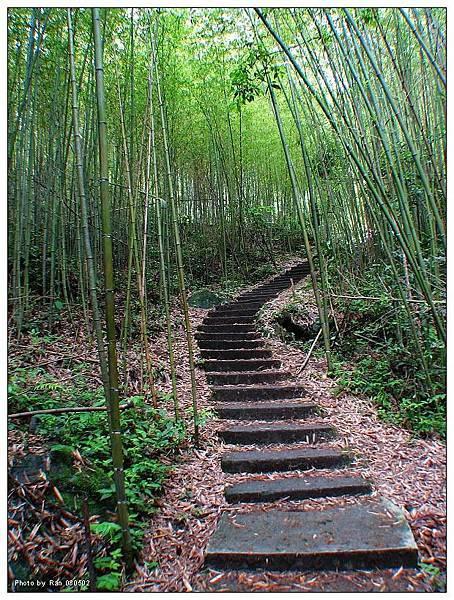 通往神仙谷的竹林