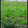 就只是地上的青草