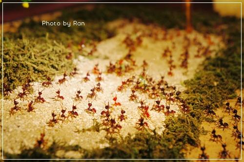 超小的螞蟻大軍!