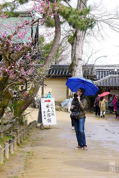 旅居日本:44歲-3天