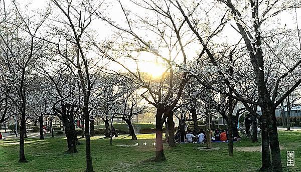 旅居日本:城北公園賞自然