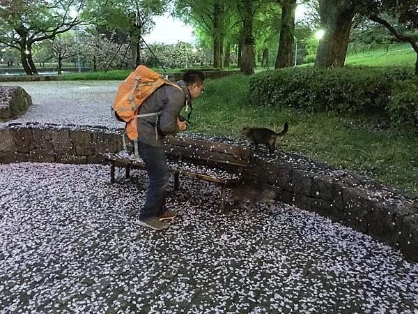 旅居日本:隨著自然在大阪轉了半圈