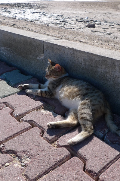土耳其很多流浪貓