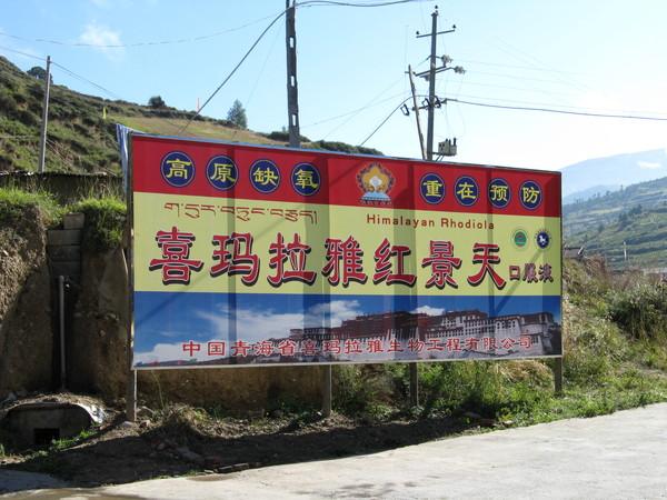 路邊也有賣紅景天