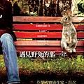 遇見野兔的那一年 - Arto Paasilinna .jpg