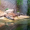 zoo-13.jpg
