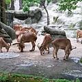 zoo-20.jpg