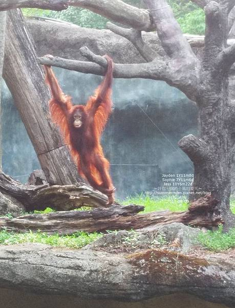 zoo-28.jpg