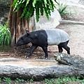 zoo-29.jpg