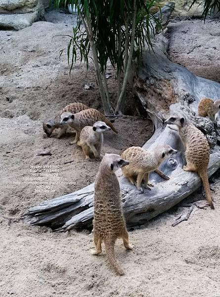 zoo-37.jpg