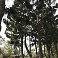 200321-06.JPG