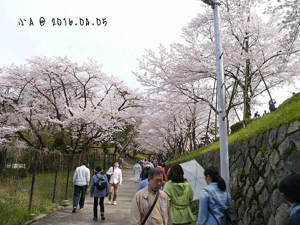20164605254.jpg