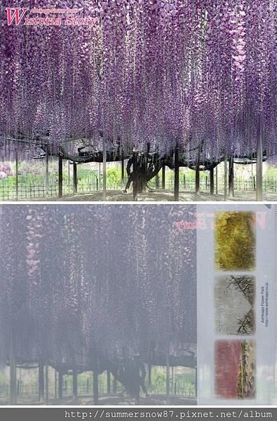 足利花卉公園-001.jpg