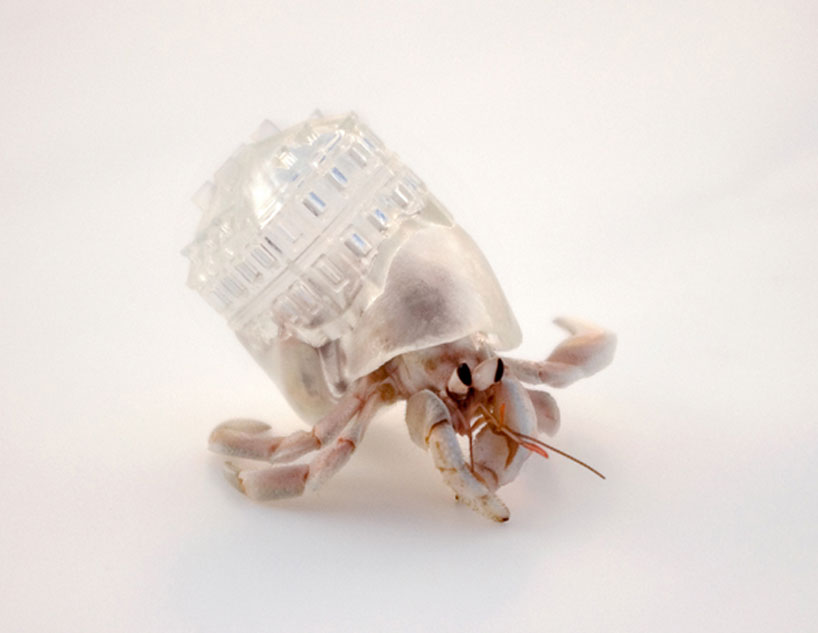aki-inomata-hermit-crab-shells-designboom-04