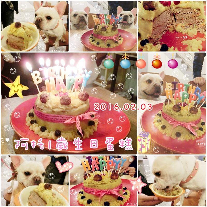 cats阿托1歲生日蛋糕.jpg